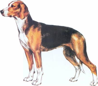 Lovački pas Srpski_trobojni_gonic3